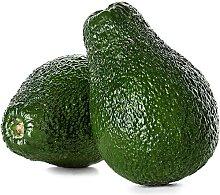 10 pezzi Avocado Semi Frutta esotica rara Pelle