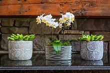 100 pc/sacchetto rari Mini Orchidea semi di