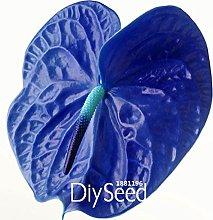 100 semi / Lot rare semi di fiore Anthurium
