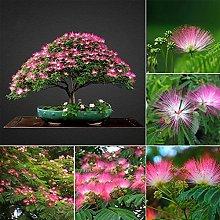 100Pcs Albizia Tree Flower Seeds Pianta Perenne In