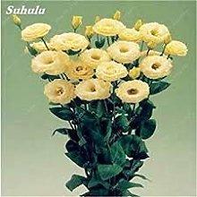 100Pcs rari Semi Eustoma perenne piante da fiore