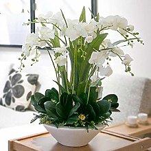 200pcs bellissime orchidee phalaenopsis fiori semi