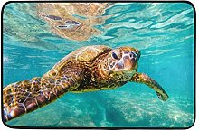 3D Zerbini Stampa Benvenuto Zerbino Mare Oceano