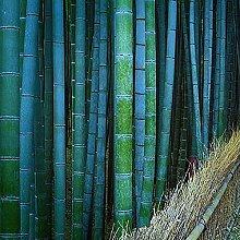 50 pezzi di semi di bambù facili da mantenere
