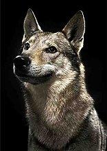 5D Pittura Diamante DIY Pet Dog Diamante Rotondo