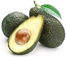 5Pezzi I semi di avocado sono semi di frutti da