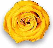 Albalù Rose Vere Stabilizzate Arancioni su Fiori