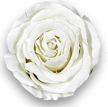 Albalù Rose Vere Stabilizzate Bianche su Fiori di