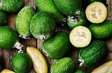 ALBERO DI FEIJOA TROPICALE - pianta da frutto da