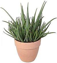 Aloe vera extra in vaso terracotta arena Ø40