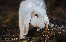 Animale Di Coniglio Bianco Puzzle In Legno Giochi