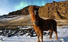 Animale Pony Sulla Neve Puzzle In Legno 98 Pezzi