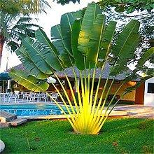 ANLV - Semi di Cycas, 150 pezzi, rara pianta