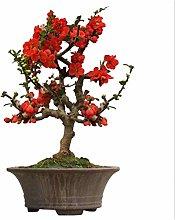 Balcone Fiore Giardino Interno In Vaso Begonia