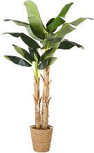 Banano artificiale in vaso