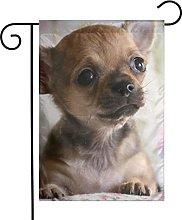 Bandiera da giardino Carino Chihuahua Puppy House