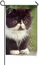 Bandiera, Design simpatico gattino, Bandiera da