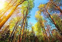Bel sole ginseng albero celeste sfondo decorazione