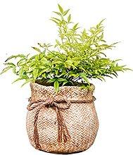 BFSHY Vasi per Piante in Cemento, Decorazione per