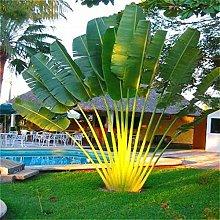 Bloom Green Co. 10pcs gaint Bonsai palma pianta
