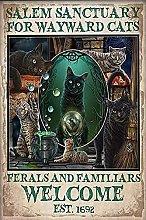 Bokueay Mystical Cats Salem Sanctuary for Wayward