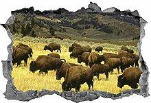 Bufalo, 3D, Safari, Adesivo, Animali, Adesivo,