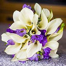 Bulbi calla Splendide piante da aiuola da giardino