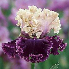 Bulbi Di Iris,Fiori Piante Giardino piacevole