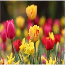 Bulbi di tulipano Balcone Fiori Bonsai Esotici