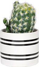 Cactus artificiale con vaso a righe