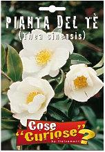 Camellia sinensis (Pianta del tè) (Semente)