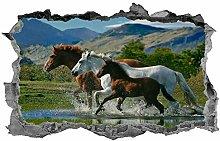 Cavalli, adesivo, 3D, adesivo, cavallo, arte della