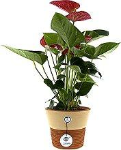 Cerámica Rambleña - Vaso decorativo per piante