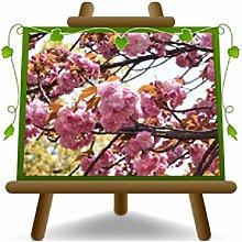 Ciliegio da Fiore Kanzan Piante Ornamentali - su