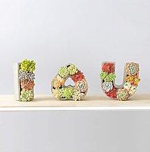 Cuore A Perma Di Vasi Succulenti Con Fori