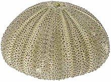 DealMux Natural Sea Urchin Rettile Box Acquario