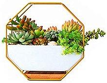 DealMux Vasi da fiori in terracotta Vasi da fiori