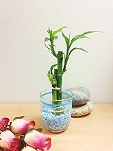 Easy Plants - Vaso portafortuna in bambù foderato