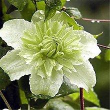 Esotici da giardino in vaso profumati speciali