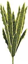 Euro Palms 82530578, Pianta Ornamentale:
