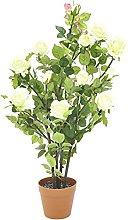 Europalms - Cespuglio di Rose, Panna