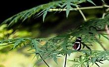 Farfalla Sulla Foglia Puzzle In Legno 98 Pezzi