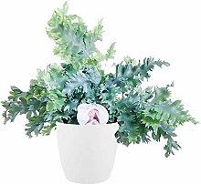 Felce da Botanicly – Felce Blue Star in vaso