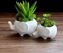 Flower Pot Plants Bianco Elefante in ceramica POTE
