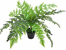 Foglia 50 cm pianta sempreverde, vaso in plastica