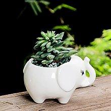 Forma Ippopotamo Ceramica Vasi Succulenti,Cartoni