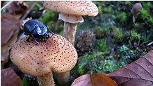 Funghi E Insetti Puzzle In Legno 98 Pezzi Sfida