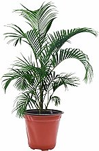 Funight - Vaso per germinazione a lunga durata,
