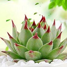 Giardino Di Piante In Vaso Di Fiori Di Semi Di