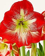 Giardino domestico ornamentale in vaso Splendido